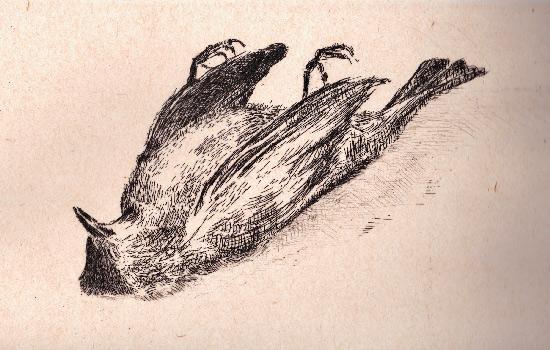 Astrid-de-La-Forest-L'Oiseau-mort,-2017-Eau-forte-sur-Japon-appliqué-Dimensions-à-la-planche---15-x-24,5